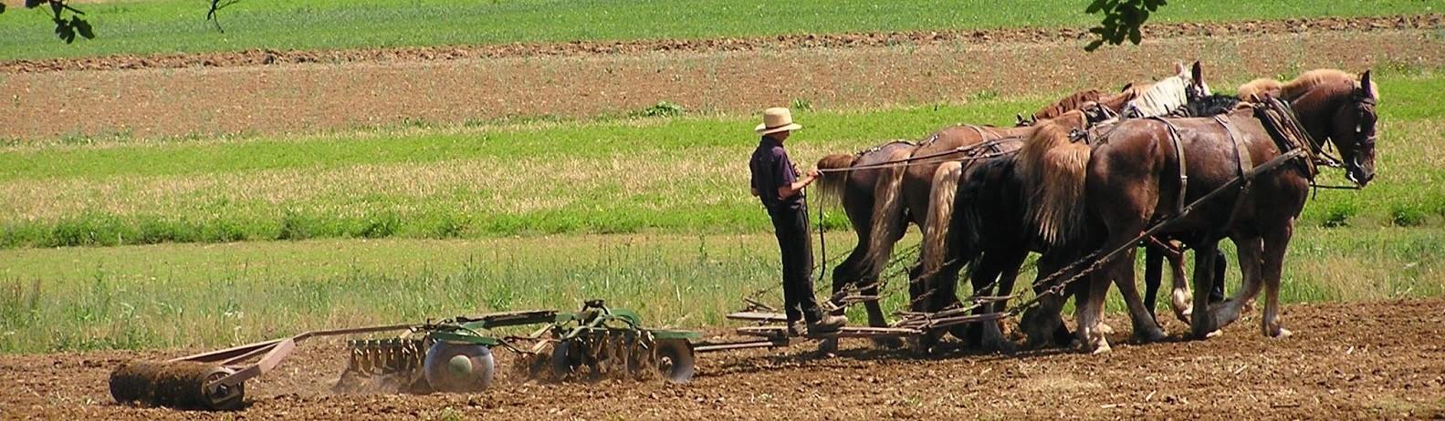 New York, Washington & Amish, Fra verdens førende metropoler til 1700-tals landbrug hos Amish folket på få 100 kilometer
